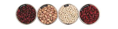 US Dry Beans Varieies Guide